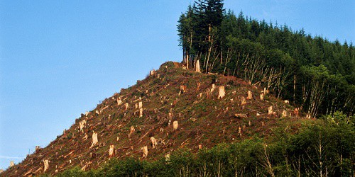 Deforestation Means Self Destruction  Throw Some Light With Example